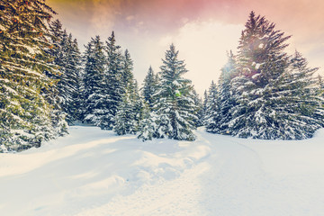 Winter landscape, snow-covered trees in Swiss Alps, filtered