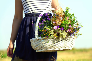 Female hands with bouquet of wildflowers in wicker basket over field background