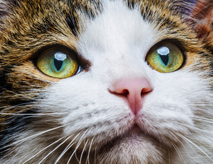 a cat eyes close up