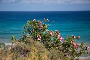 Blumen auf Fuerteventura