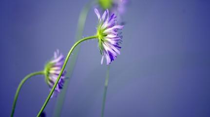 Blaue Blüten mit blauem Hintergrund