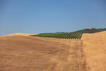Val d'Orcia le vigne