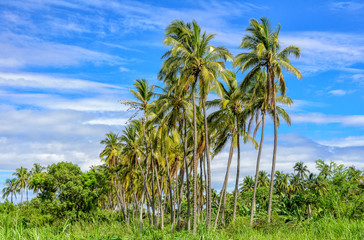 Palm trees in a tropical forest