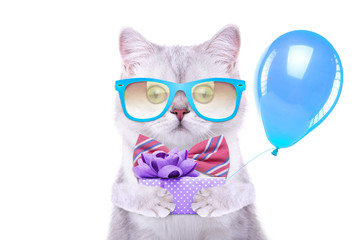 Smart beautiful british cat with a gift box. Funny animals. Trendy cat dressed in beautiful clothes