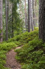 Austrian Forest near Velden am Worthersee (Carinthia, Austria)