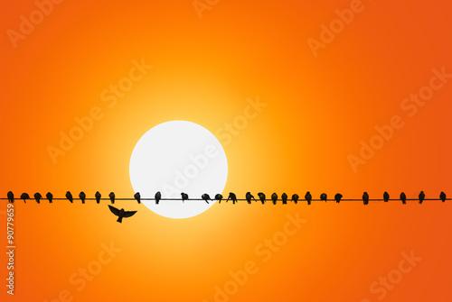 Vögel auf Telefonleitung \