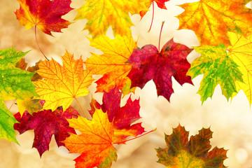 bunte Blätter im Wind