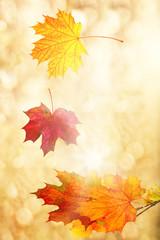 bunte blätter in der Herbstlandschaft Karte