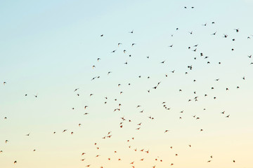 Silhouettes of birds in the sky