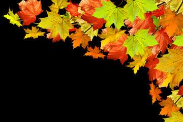 Autumn foliage. maple leaves isolated on black background