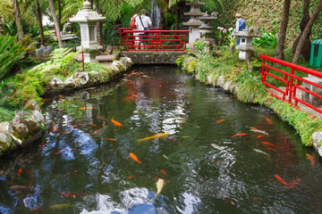 Fototapete - Lake with Koi fish in Tropical Garden Monte Palace. Funchal, Madeira, Portugal