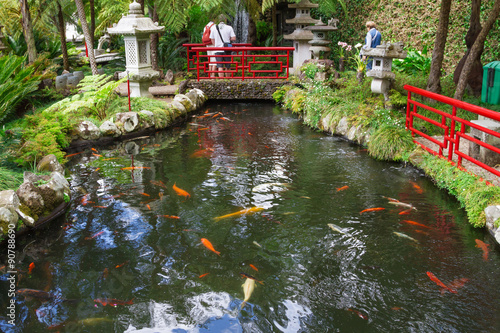 Fototapete Lake with Koi fish in Tropical Garden Monte Palace. Funchal, Madeira, Portugal