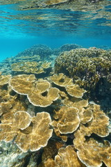 Coral reef underwater with elkhorn and fire corals