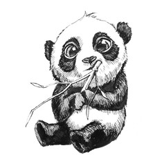 cute adorable baby panda bear illustration, hand drawn sketch of panda bear eating bamboo, isolated on white background