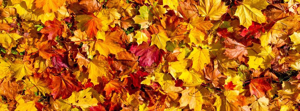 Bunte Herbstblätter - Panoramaformat