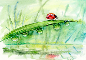 Ladybug on a leaflet. Red bug on the grass. Insects. Background wild nature. Watercolor hand drawing illustration