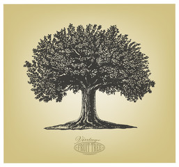 Tree in engraving style. Vector illustration of a fruit tree in vintage woodcut style. Isolated, grouped.
