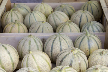 Melons 01