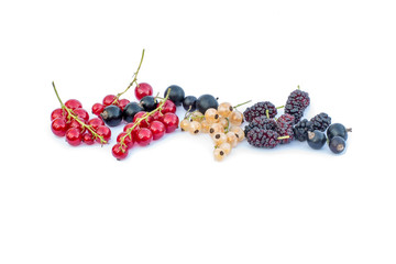 Black and red berries lineup isolated on a white background
