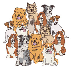 Group dogs color isolate on white