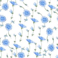 Chicory flowers pattern