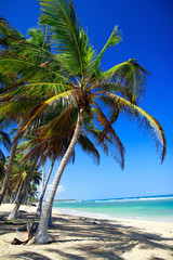 Wall Mural - Palm tree on caribbean beach with turquoise water