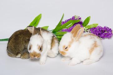 Coniglietti con fiore viola
