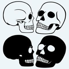 Human skull. Isolated on blue background