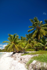 Palms on caribbean sea, Saona