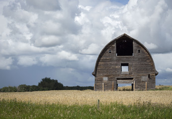 horizontal image of an old brown wooden barn sitting in a golden  swathed field under dark billowing clouds in the summer time with room for text.