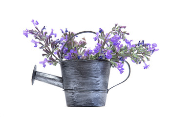 Old aluminium watering can with purple flowers isolated on white