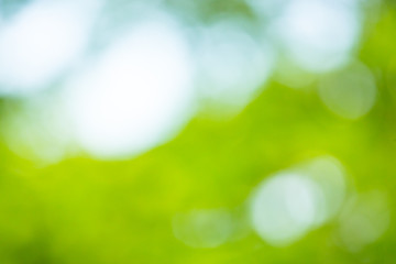 Abstract blur green leaf background