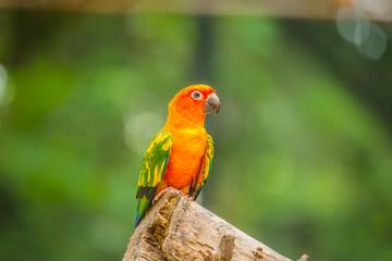 Colourful parrot bird.