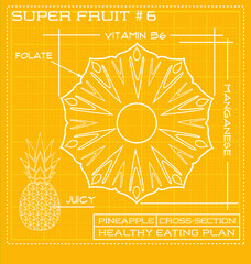 Blueprint diagram line drawing of fruit. Infographic of a pineapple cross section.