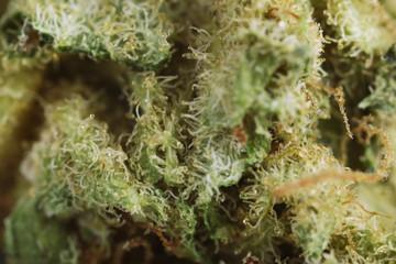 Medical dry cannabis close up
