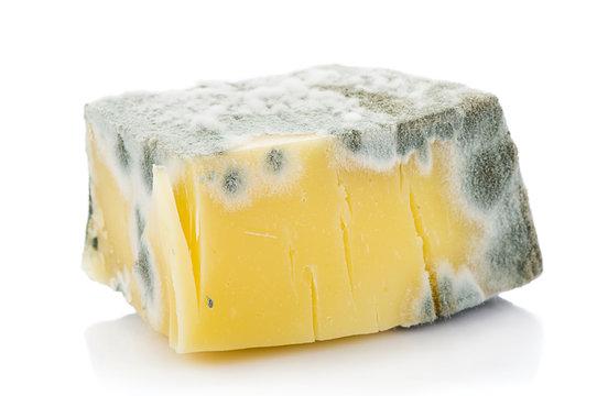 Mouldy Cheddar Cheese