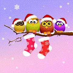Owls with Christmas socks