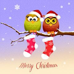 owls with Christmas socks