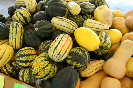 assortment of melons and squash at market