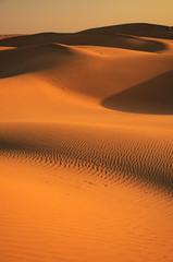 Sand dunes of Thar Desert, Rajasthan, India