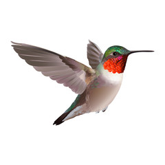 Hummingbird - Colubris archilocus. Hand drawn vector illustration on white background of a flying  Ruby-troathed  hummingbird with colorful glossy plumage.