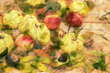 Autumn harvest - autumn decoration,  picture is made of two images (fruits and leaves)