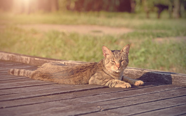 Cat resting in the park