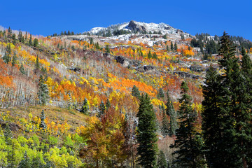 Colorful autumn trees in Colorado mountains