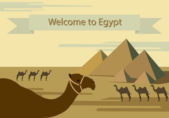To visit Egypt. Tourist attractions of Egypt. Desert, pyramids, camels