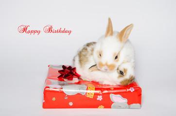 Cartolina di buon compleanno con due coniglietti sopra al pacchetto regalo.