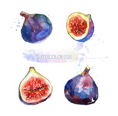 Watercolor illustration of figs. Ripe figs on white background. Tasty fruits for design.