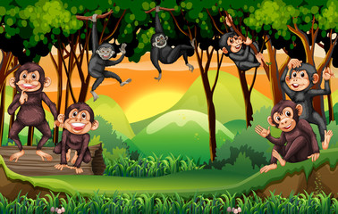 Monkeys climbing tree in the jungle