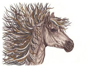 Beautiful horse illustration with bright brown creative mane. Ha