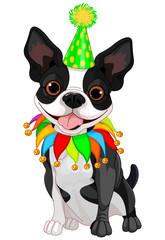 Boston Terrier Birthday